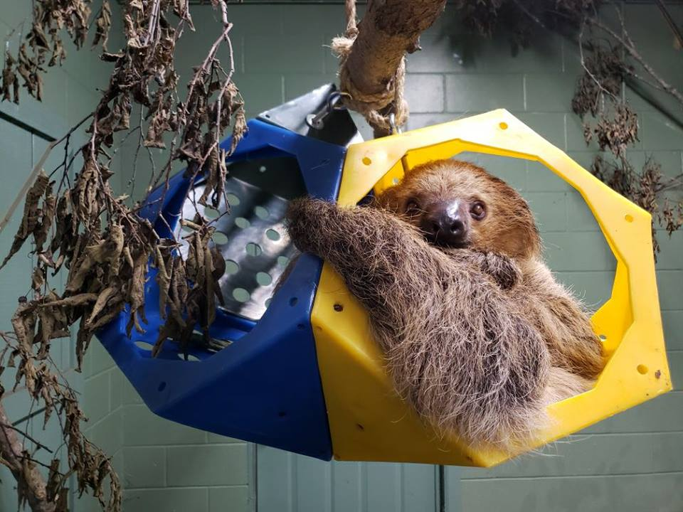 sloth-enrichment