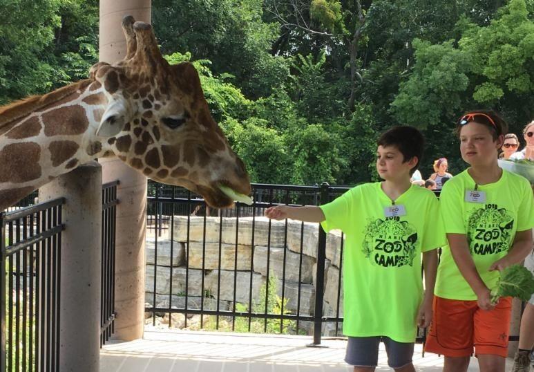 zoo-camp-giraffe-feed