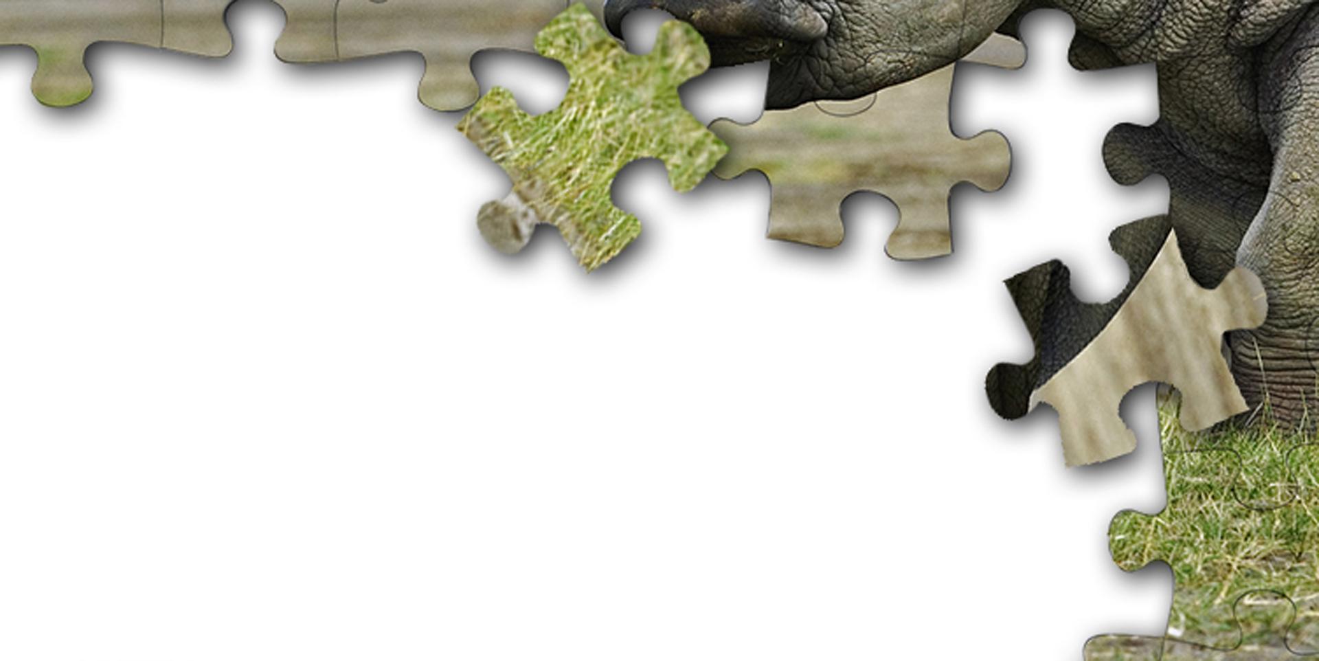 Rhino Campaign