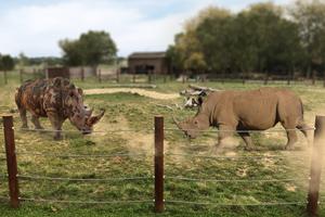 rhino_exhibit-render